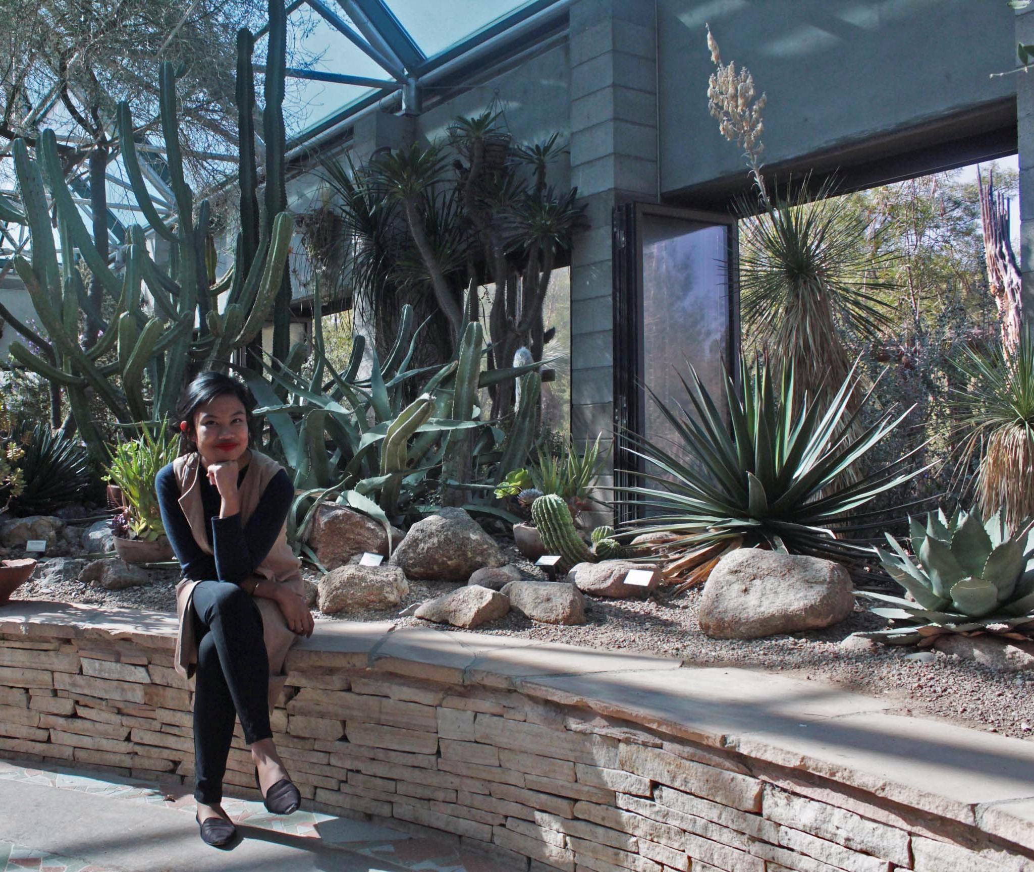 sunshine and cacti